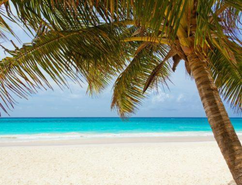 Tendance exotique sous les tropiques